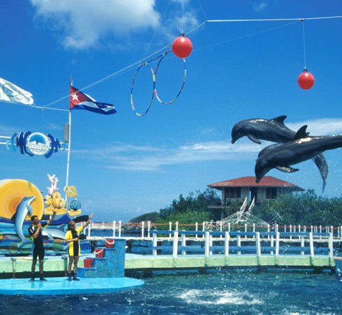 Dolphin-Center,-Holguin